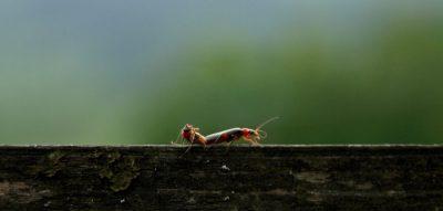 sexo, reprodução, cerca, insectos