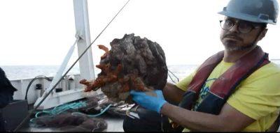 Cópia de corais-amazonas-1