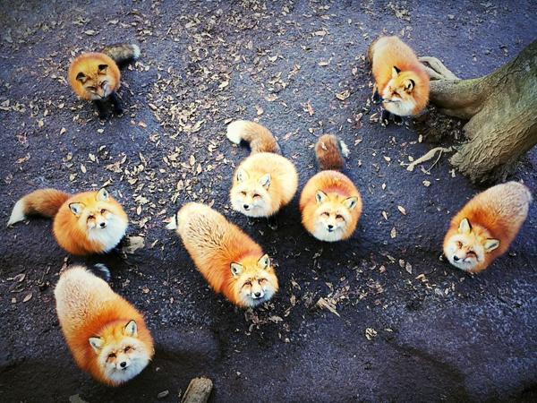 Animais, 1º Prémio: Erica Wu