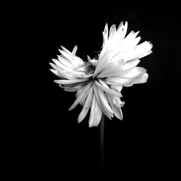 Flores, 2º Prémio: Amo Passicos