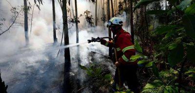 Imagem do combate às chamas na Madeira