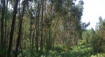 florestas-2
