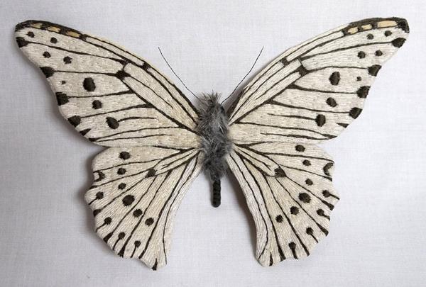 borboletas-YumiOkita12
