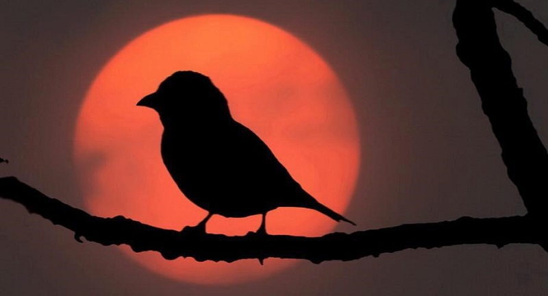 ave-noite-2
