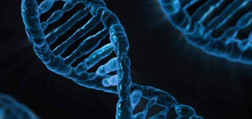 ADN - Genética