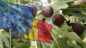 Europa: A Parábola dos Figos
