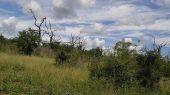 Suazilandia | Caça furtiva